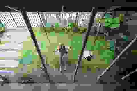 """Nhà ở Nghệ An như """"đi nghỉ dưỡng"""" nhờ sân vườn xanh mát quanh năm"""