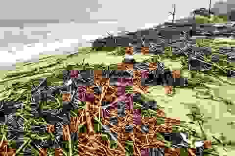 """Hàng chục tấn rác thải """"bủa vây"""" bãi biển ở Quảng Nam sau lũ"""