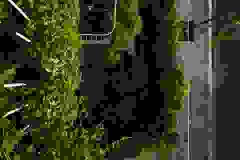 """Tám khu vườn bậc thang """"ẩn"""" trong ngôi nhà phố của gia đình ở Nha Trang"""