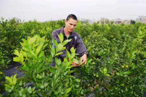 Hơn 100 nghìn hộ nghèo được đào tạo nghề, giải quyết việc làm