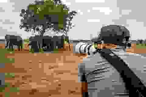 Các nhà làm phim giữ an toàn khi ghi hình động vật hoang dã như thế nào?