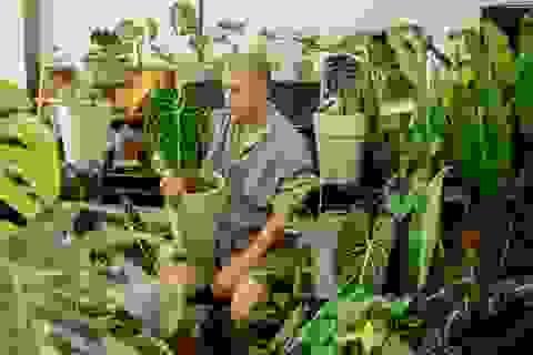 Chàng trai Sài Gòn chi 300 triệu đồng trang trí nhà bằng 50 loại cây độc lạ