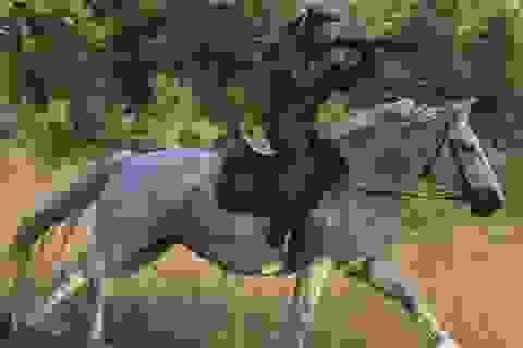 """Vẻ đẹp mạnh mẽ trên lưng ngựa của các """"bóng hồng"""" quân đội Nga"""