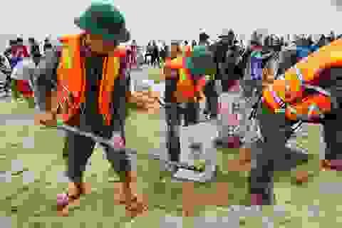 Khẩn cấp gia cố hơn 4km đê biển hư hỏng nặng