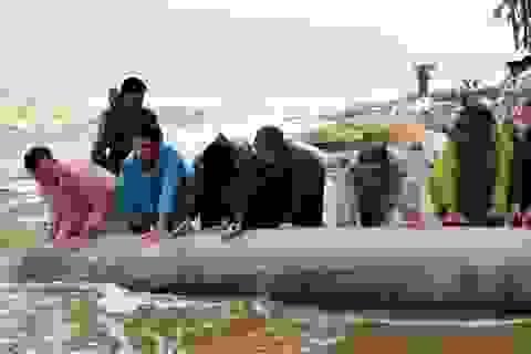 Huy động cả trăm người ứng cứu bờ biển Cửa Đại