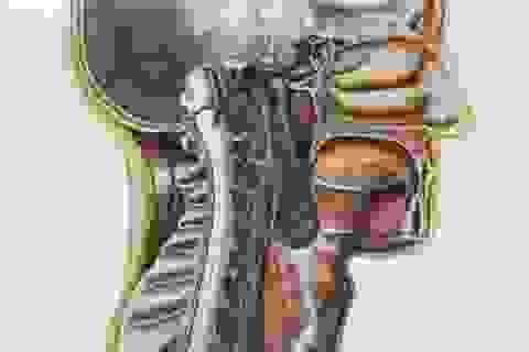 Các bác sĩ vừa phát hiện ra một bộ phận bí mật trong vùng đầu của người