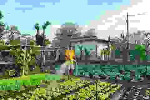 Đã mắt khu vườn 700m2 đủ loại rau củ quả sạch của gia đình ở Đắk Lắk
