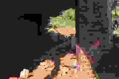 Núi xuất hiện đường nứt lớn, Quảng Bình di dời khẩn cấp 20 hộ dân