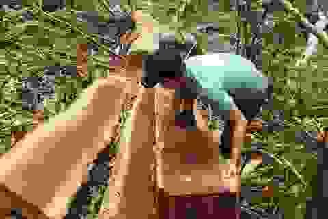 Để lâm tặc phá rừng, 3 cán bộ lâm trường bị cho thôi việc