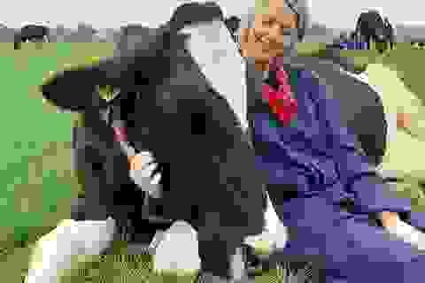 """Đổ xô đi... """"ôm bò"""" để học cách vui sống"""