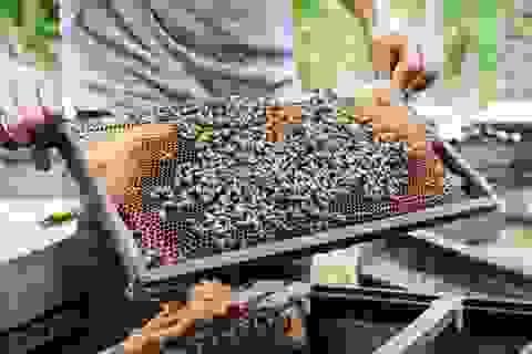 Nỗi khốn khổ của người nuôi ong sau bão lũ