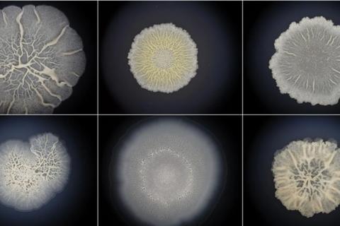 Những dạng sự sống đầu tiên có thể giống động vật hơn chúng ta nghĩ