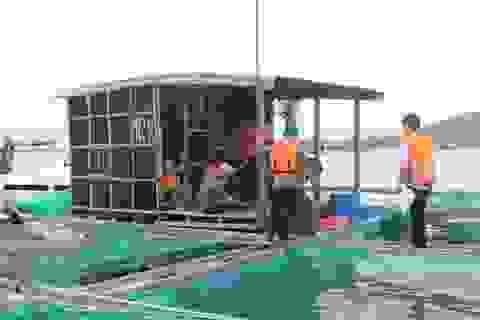 """""""Thủ phủ"""" tôm hùm, cá bớp… trên Vịnh Vân Phong chạy bão"""