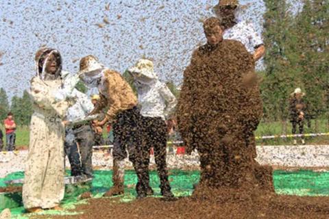 Cho gần 64 kg ong phủ quanh thân, người đàn ông lập kỷ lục thế giới mới