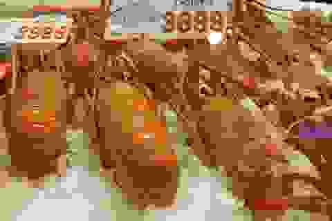 Australia dừng xuất khẩu tôm hùm sang Trung Quốc