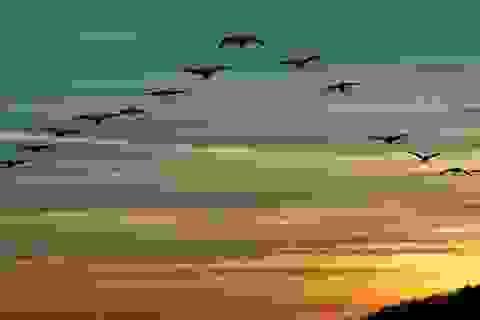Bạn có biết: Tại sao một số loài chim lại phải đi di cư?