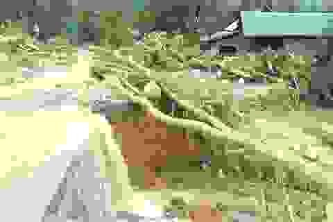 Hạ tầng giao thông Quảng Trị thiệt hại hơn 300 tỷ đồng vì mưa lũ