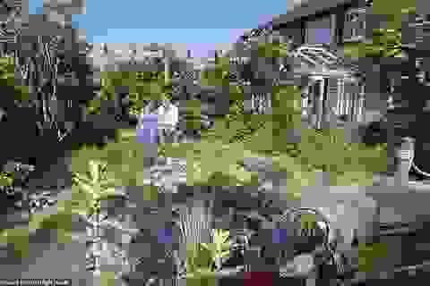 Cải tạo bãi cỏ bên nhà, 2 năm sau vợ chồng có khu vườn xanh mát