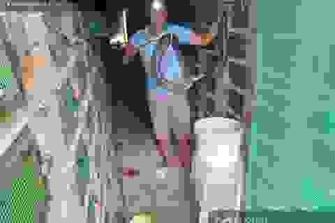 Lão nông nuôi hàng chục ngàn con rắn hổ mang, cứ bán 1 con lời 1 triệu đồng
