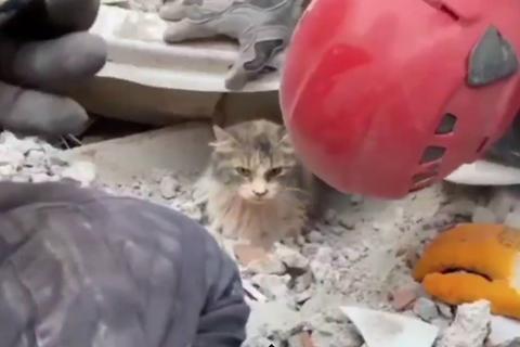 Mèo con còn sống dưới đống đổ nát hơn 4 ngày sau động đất ở Thổ Nhĩ Kỳ