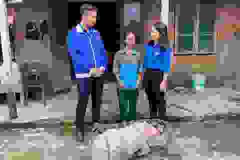 Thành đoàn Hà Nội tặng con giống, sửa nhà giúp đồng bào miền Trung sau lũ