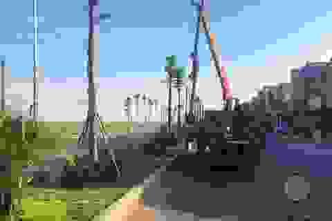 """Vụ cây xanh """"đột tử"""" ở Thanh Oai: Tức tốc nhổ bỏ, trồng thay thế cây mới"""