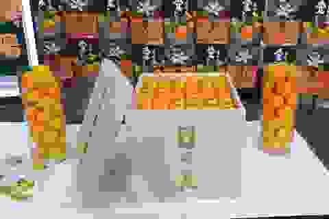 """Hơn 2,2 triệu đồng/quả quýt hồng Nhật, đại gia """"rút ví"""" mua luôn trăm quả"""