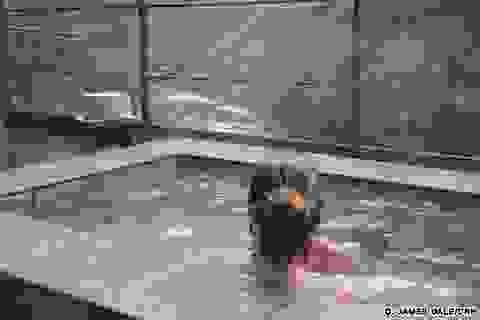 Tắm onsen trong mắt du khách phương Tây