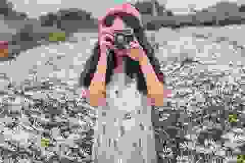 Ngẩn ngơ ngắm cánh đồng cúc họa mi giữa cao nguyên Mộc Châu
