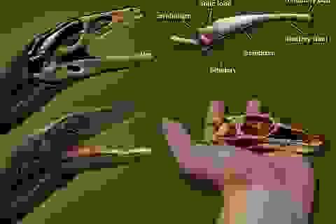 Tái tạo thành công bộ não của một trong những loài khủng long già nhất