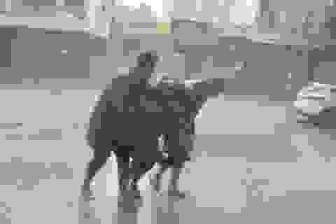 """Cảnh người dân Nha Trang """"đánh vật"""" với gió bão"""