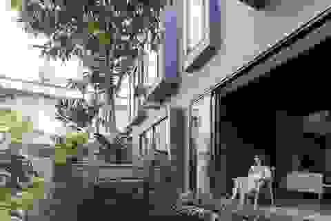 """""""Khu rừng nhiệt đới"""" nằm ẩn trong nhà phố khiến ai bước vào cũng trầm trồ"""