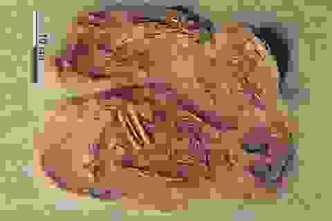 Lần đầu tiên tìm thấy hài cốt của một cặp song sinh thời tiền sử