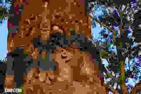 Bí ẩn cột đá nghìn năm tuổi bên sườn núi Đại Lãm, Bắc Ninh