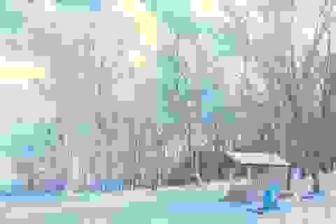 Những điểm ngắm tuyết sớm ở Nhật Bản năm nay