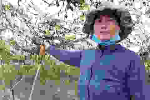 """Người trồng rau """"gượng dậy"""" sau bão chuẩn bị cho vụ Tết Nguyên đán"""