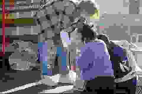 Brad Pitt lái xe tải đi tặng đồ ăn cho người nghèo