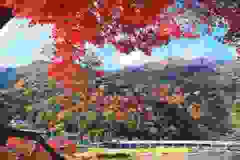 Đến Tokyo vào mùa thu, dự lễ hội lá phong nổi tiếng nhất nước Nhật
