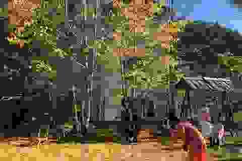 """Rặng cây lá vàng tuyệt đẹp ở Sa Pa """"hút"""" du khách tới check-in"""