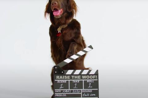 Bài hát đầu tiên trên thế giới được sáng tác cho... chó