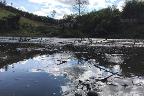 """Sẽ xử lý dứt điểm vụ trang trại lợn """"tra tấn"""" người dân tại Nghệ An"""