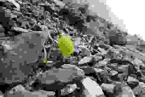 """Loài thực vật quý tiến hoá khả năng """"ngụy trang"""" để không bị hái"""