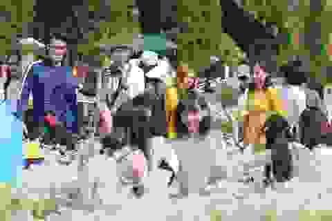 """Nhiếp ảnh gia """"bó tay"""" trước cảnh chen chân trong vườn cúc hoạ mi ở Hà Nội"""