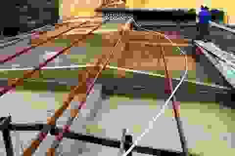 Bão lũ dồn dập, Đại học Huế thiệt hại nặng nề