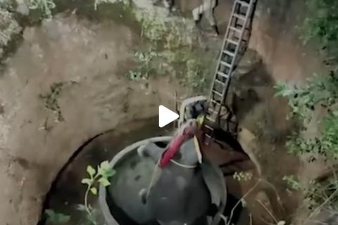 Voi Ấn Độ bị chó đuổi ngã xuống giếng sâu 15 mét và cuộc giải cứu ly kỳ