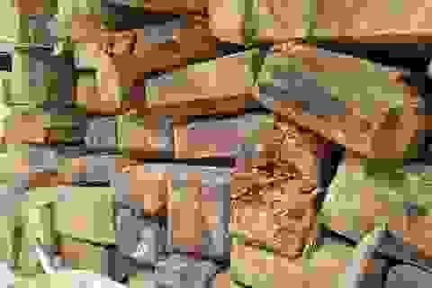 Cả trăm m3 gỗ quý nằm vạ vật chờ... hỏng tại Ban quản lý rừng