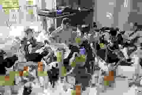 Bên trong ngôi nhà của người phụ nữ chung sống với 480 con mèo, 12 chú chó