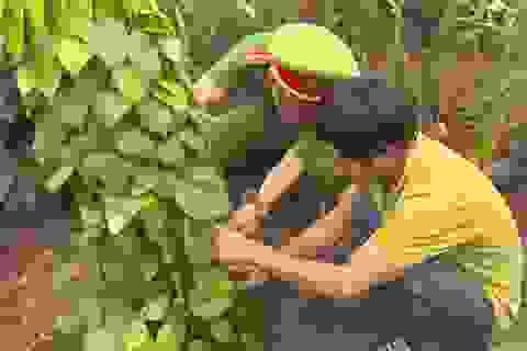Nghi án người đàn ông đào, chặt cây của dân… mang về rẫy mình trồng