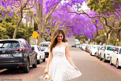 """""""Cơn sốt"""" hoa phượng tím mùa Xuân ở xứ Kangaroo"""