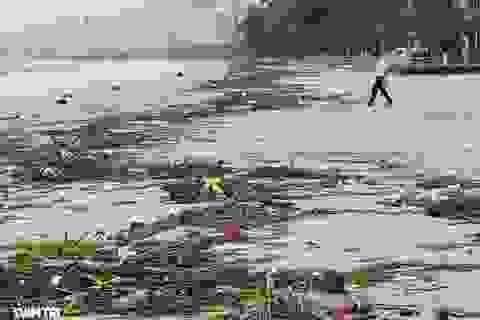 Bãi biển Nha Trang ngập ngụa rác sau mưa lũ